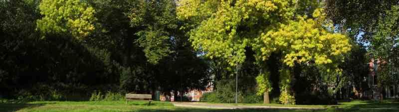 De Leliesingel in het Noorderplantsoen in de stad Groningen